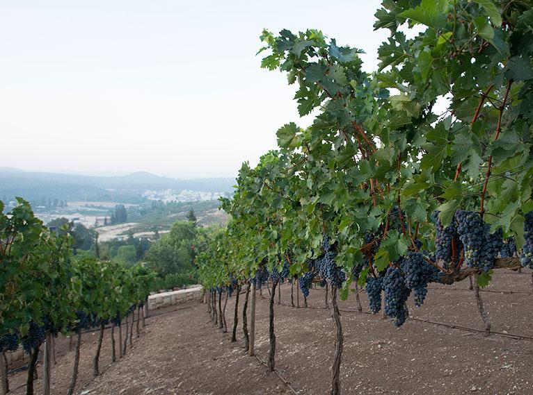Cramim Spa & Wine